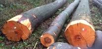 Grumes de bois de hêtre