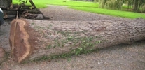 Grumes de bois divers et résineux