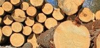 Grumes de bois : les critères pour bien choisir son fournisseur