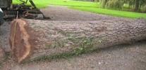 Andere loof- en naaldhoutsoorten